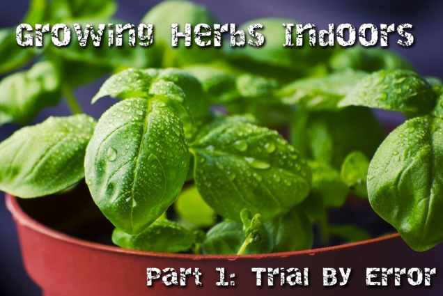 growing-herbs-indoors1