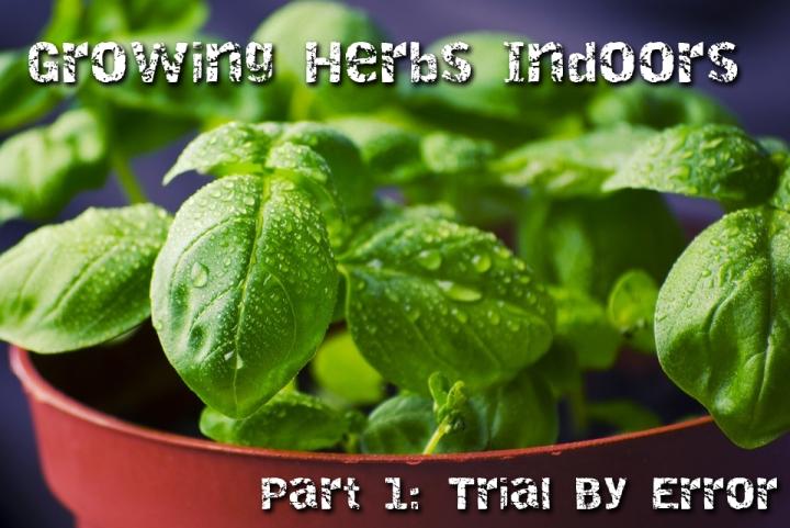 growing-herbs-indoors1