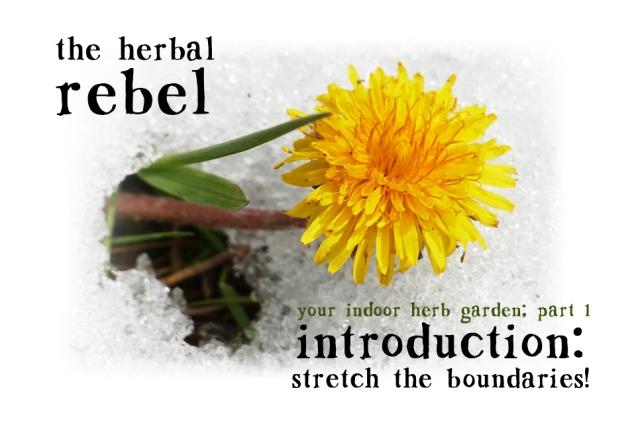 herbal-rebel-intro