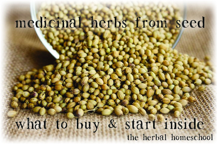 medicinal-herbs-from-seed