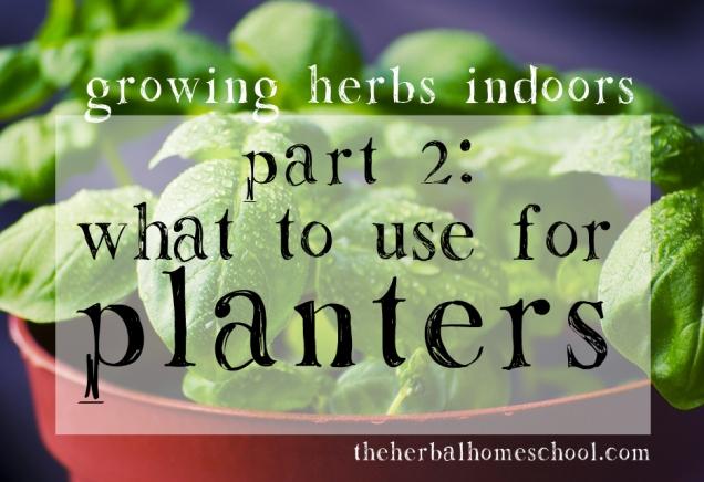 growing herbs2
