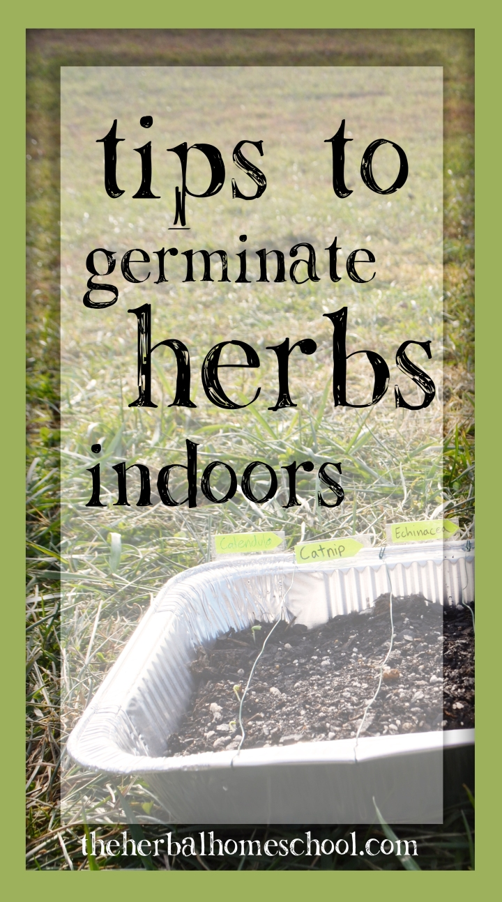 Tips to Germinate Herbs Indoors