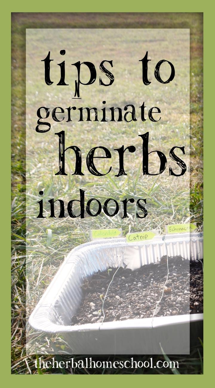 Tips to Germinate HerbsIndoors