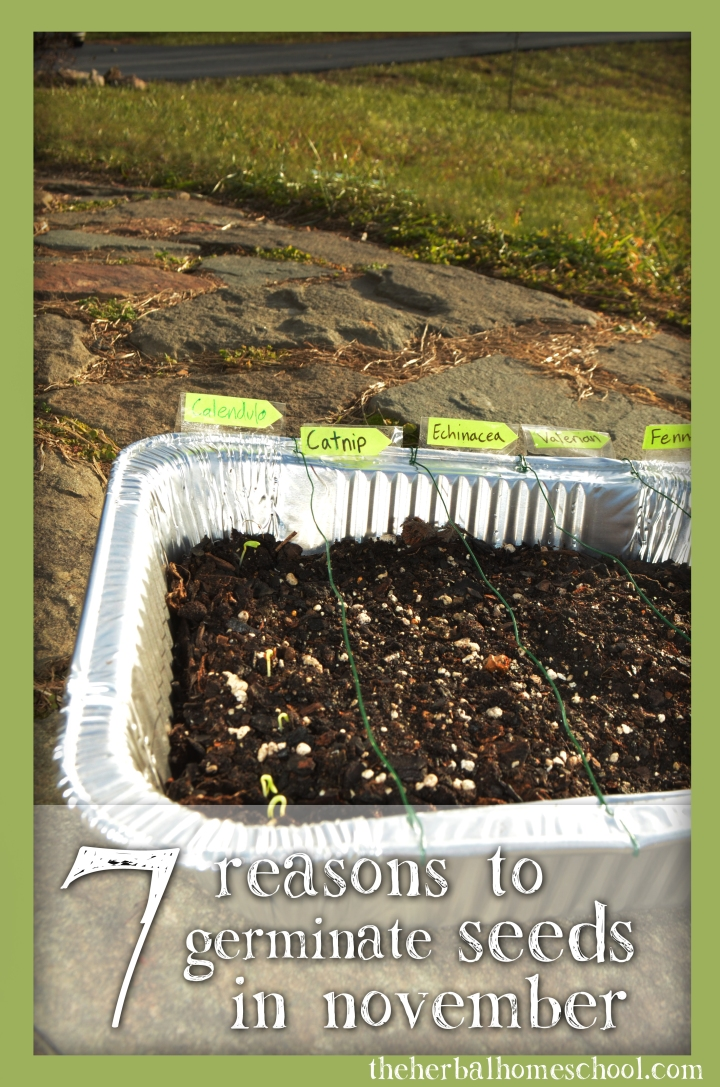7 reasons to germinate seeds in november
