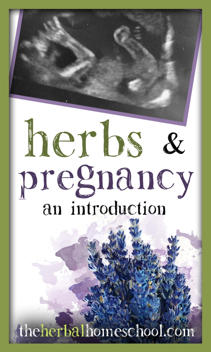 Herbs & Pregnancy: An Intro